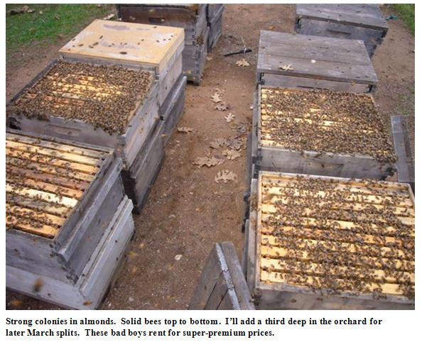 Strong colonies in almonds