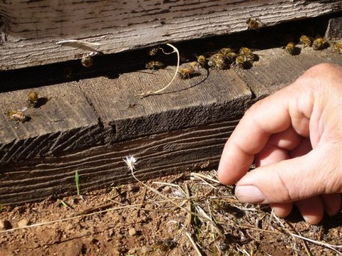 Pick up crawler bees