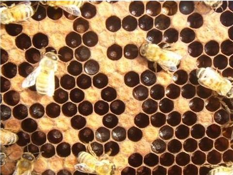 Entombed pollen