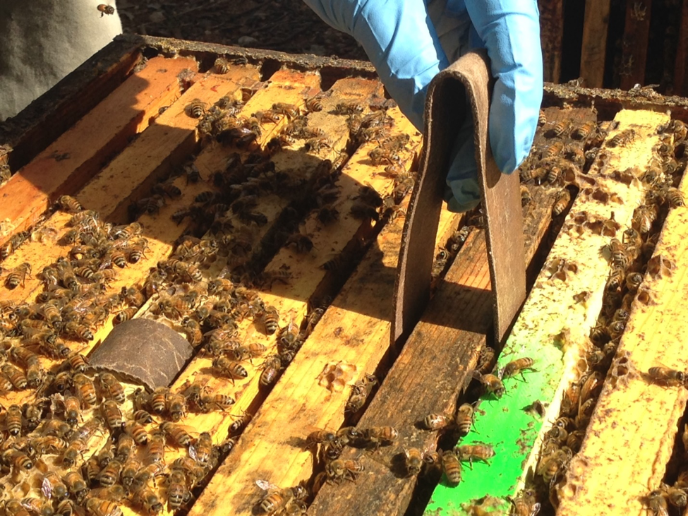 Gravity Station, Author at Scientific Beekeeping - Page 3 of 5