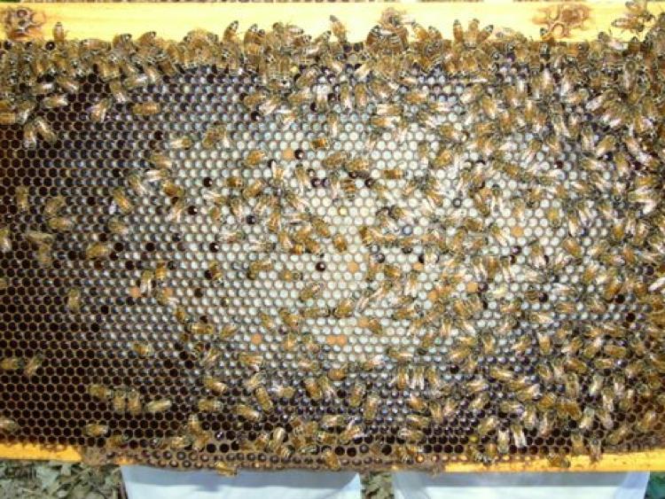 Super bee   Pro biotic bee supplement   Bee food  Apiary 500 gram   Healthy bees