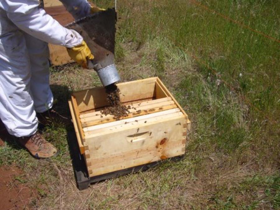 Beekeeping Honey Bee Plastic Barrel Type Hive Top Feeder with Lid 2