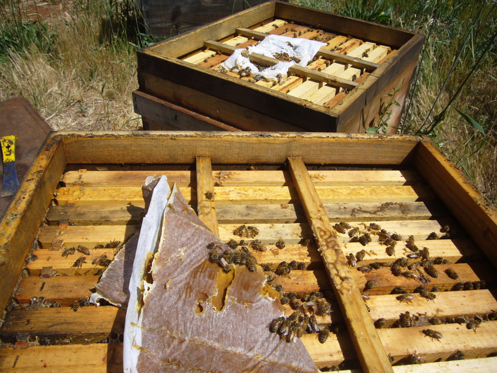 When To Feed Pollen Sub - Scientific Beekeeping