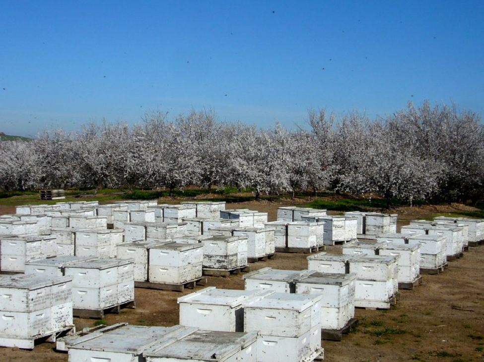 sick bees Archives - Scientific Beekeeping