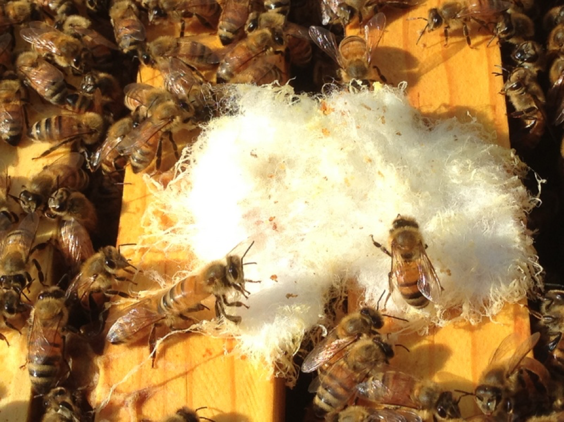 A Test of Late-Summer Varroa Treatments - Scientific Beekeeping