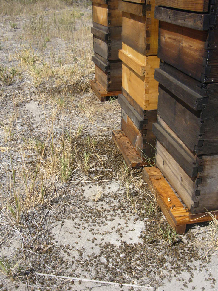 Randy, Author at Scientific Beekeeping - Page 8 of 12