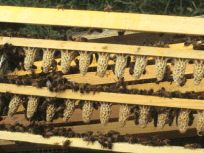 The Learning Curve - Part 2: Killing Mites without Killing Your Bees