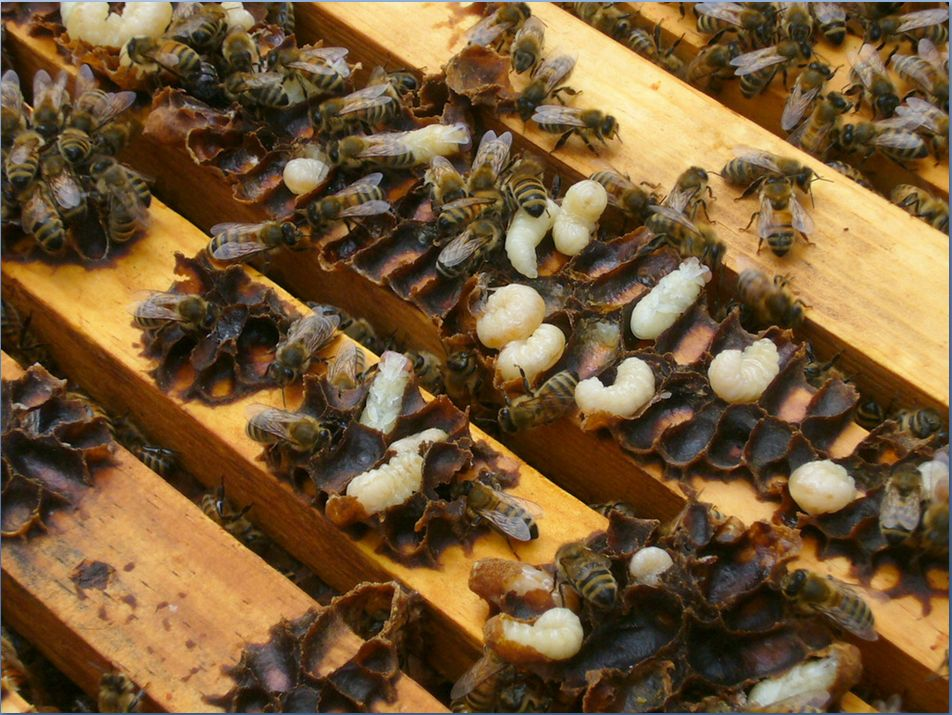 Faq - Trunch Beekeeping Group
