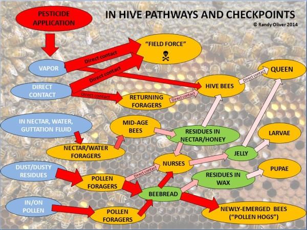 Pesticide exposure pathways