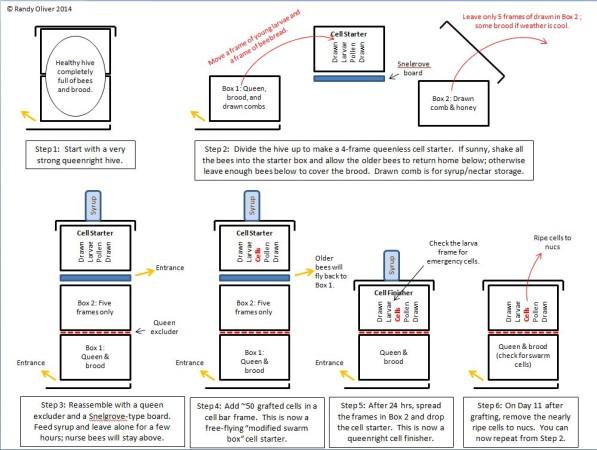 Queenrearing diagram jpg
