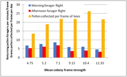 Mean colony frame strength