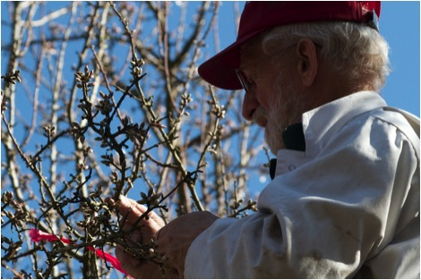 Dr. Frank Eischen of the USDA ARS at work in the almonds this season