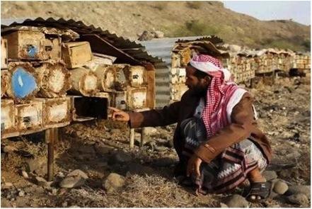 beekeeper in yemen