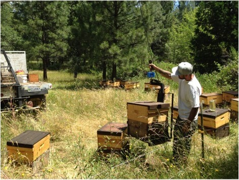 Figure 2. My son Eric weighing hives (I took the picture while holding a rope to take the bounce out of the boom). We followed him by placing jars of syrup on half the hives (randomly assigned by the flip of a coin).