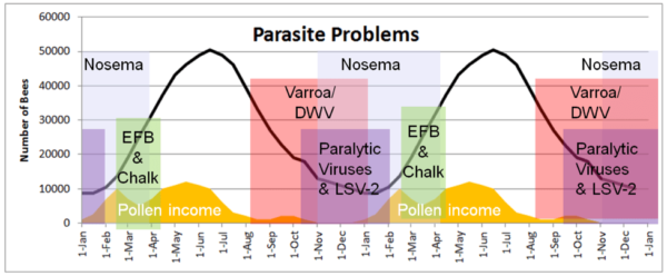 Figure 2. The seasonality of parasite problems relative to pollen income, colony buildup and decline, and time of year in my California climate, over two seasons. These parasites are present at all times of the year, but tend to cause observable disease or colony morbidity at the indicated times. Other than AFB (not shown), which can build up over summer, summer bees enjoying abundant pollen resources are typically quite healthy. But things change come fall.
