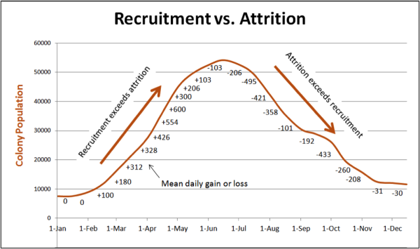 Recruitment vs Attrition