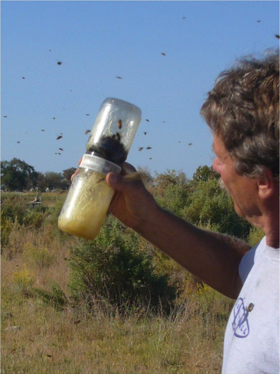Mite Management Update 2013 @ Scientific Beekeeping