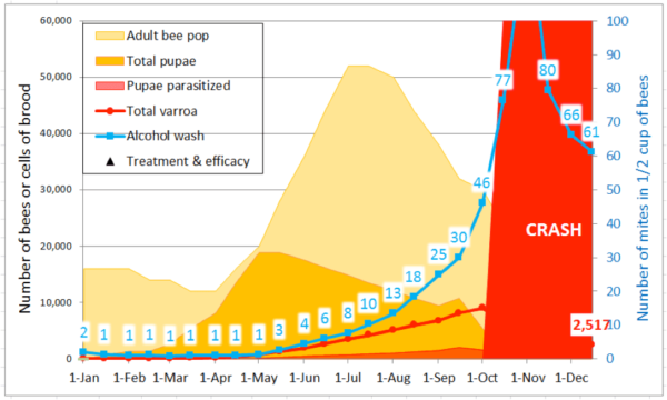 Figure 5. A simulation starting with 100 mites, with minimal mite immigration in late summer, for typical domestic bee stock. During the active broodrearing period of May 1 – July 15, the model calculated an average r (day) of 0.023, with the mite population peaking at 9000 on October 1st. The model arbitrarily indicates colony crash whenever the alcohol wash exceeds 75 mites.