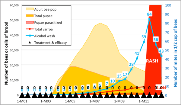 Figure 5. A simulation for a nuc started on April 1st with 50 mites. You can't directly compare the slopes of the red mite pop line with the blue alcohol wash line, since alcohol wash reflects the rate of infestation of the nurse bees, rather than the absolute mite population. That said, the alcohol wash works just fine for comparing the rate of mite buildup from one colony to another.