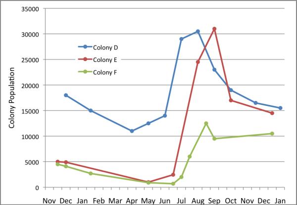 Figure 5. Colony Population