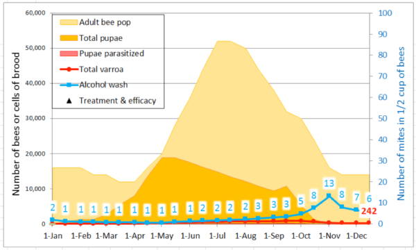 Figure 6. In this simulation, a mere 20% improvement in a few critical traits resulted in an easily manageable mite population at the end of the season (it peaked at under 900 mites in early October). The rate of mite buildup during the May 1 – July 15 period was reduced to an r (day) of only 0.012. For sustainability, the ending mite count of 242 mites could be reduced back to not more than the starting 100 by an oxalic dribble in the fall, or by drone trapping, splitting, or other method in the spring.