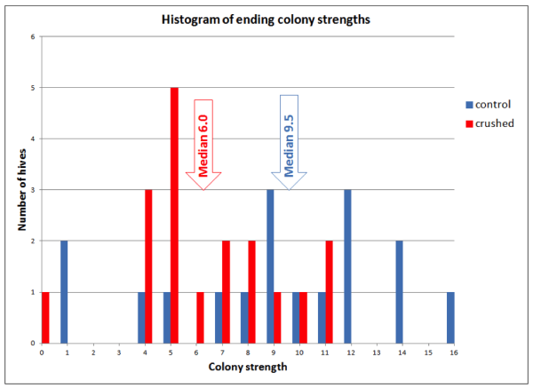 Figure 9. By the end of the trial the control colonies were consistently stronger than those which had bees crushed each month. Note that the 6 strongest colonies were all in the Control group, and 9 of 13 of the weakest colonies were in the Crushed Bee group.