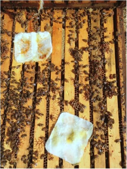 Figure 10. Proprietary mixed essential oil pads. The two pads initially did not appear to adversely affect the brood in these fairly weak hives, but later appeared to be too stressful late in the season.