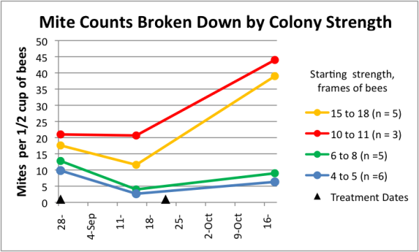 Figure 12. Lo and behold, there was clearly a relationship between colony strength and mite levels in the treated hives. The stronger colonies indeed started with somewhat higher counts (the smaller colonies had been late nucs), but note the strikingly greater rate of mite increase in the strong hives even after the second treatment.