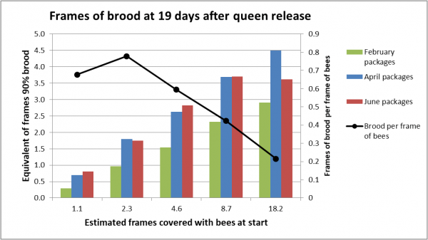 frames of brood at 19 days
