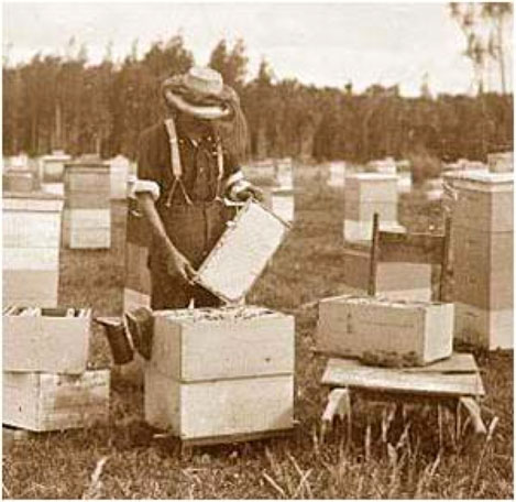 Natural Beekeeper