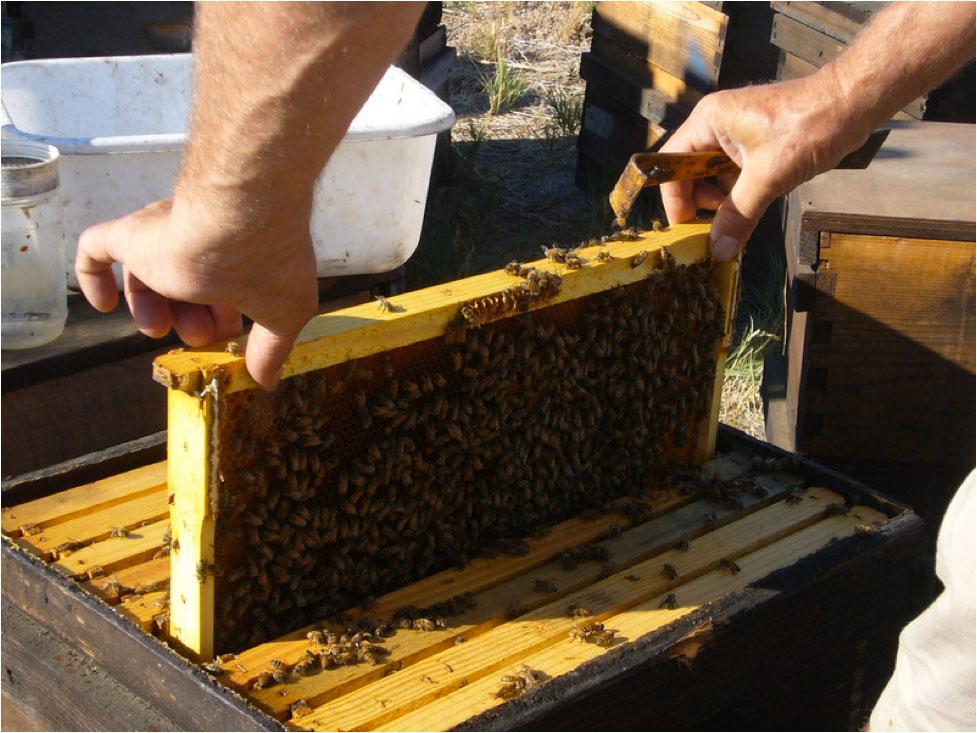 Sick Bees