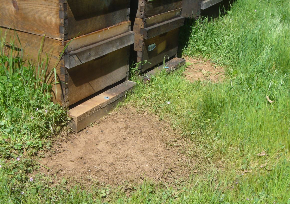 First year beekeeping - Scientific Beekeeping