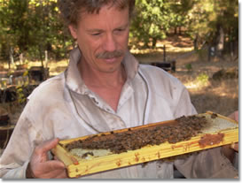 http://scientificbeekeeping.com/wp-content/themes/scibee/images/thoughtful-ds.png