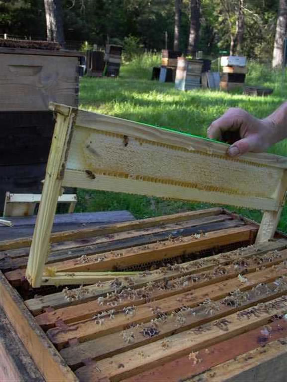 Reinserting the frame