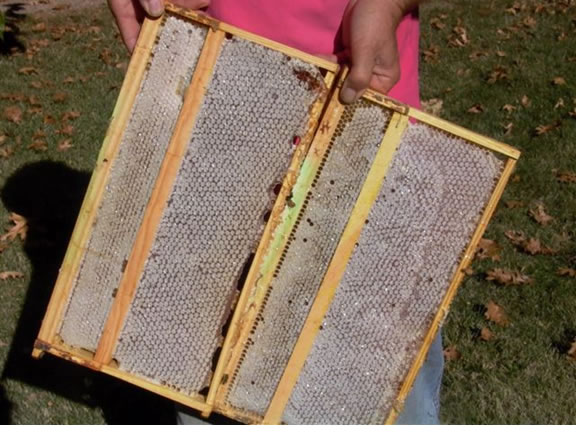 Trap frames set to edge of brood chamber