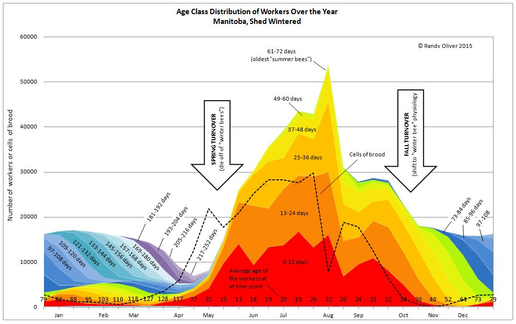 Age class distribution of workers over the year