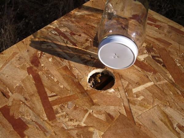 Feeder jar and OSB hive hive cover