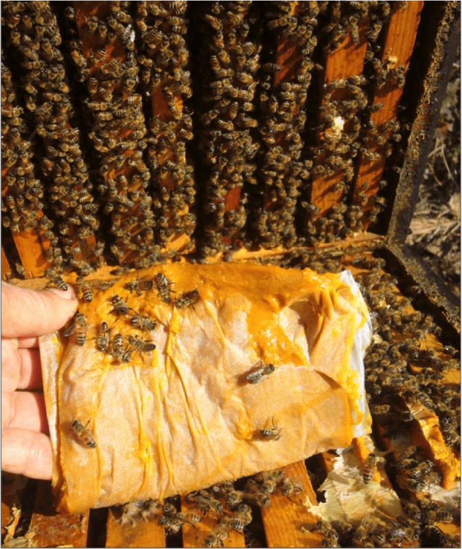 Figure 1. I raised this patty back up after placing it on top of the bee-covered top bars, to show the ugly aftermath. It would have been even worse had I then lowered the upper box. My question is, to what degree such inadvertent crushing of bees affect colony health?